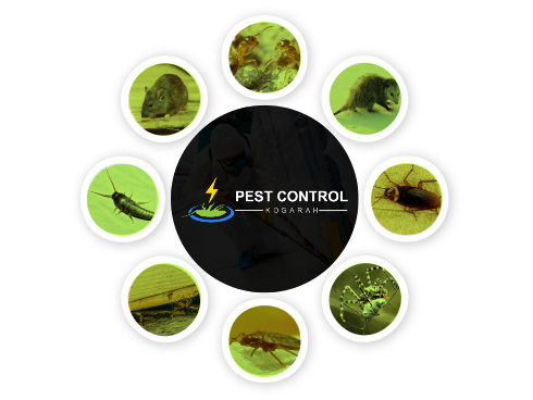Pest Control Kogarah