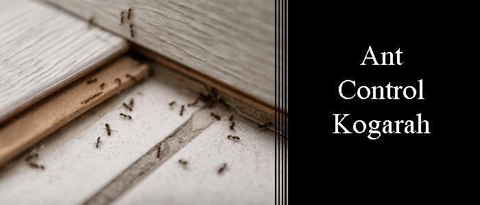 Ant Control Kogarah