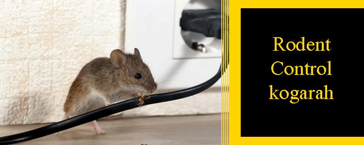 Rodent Control Kogarah